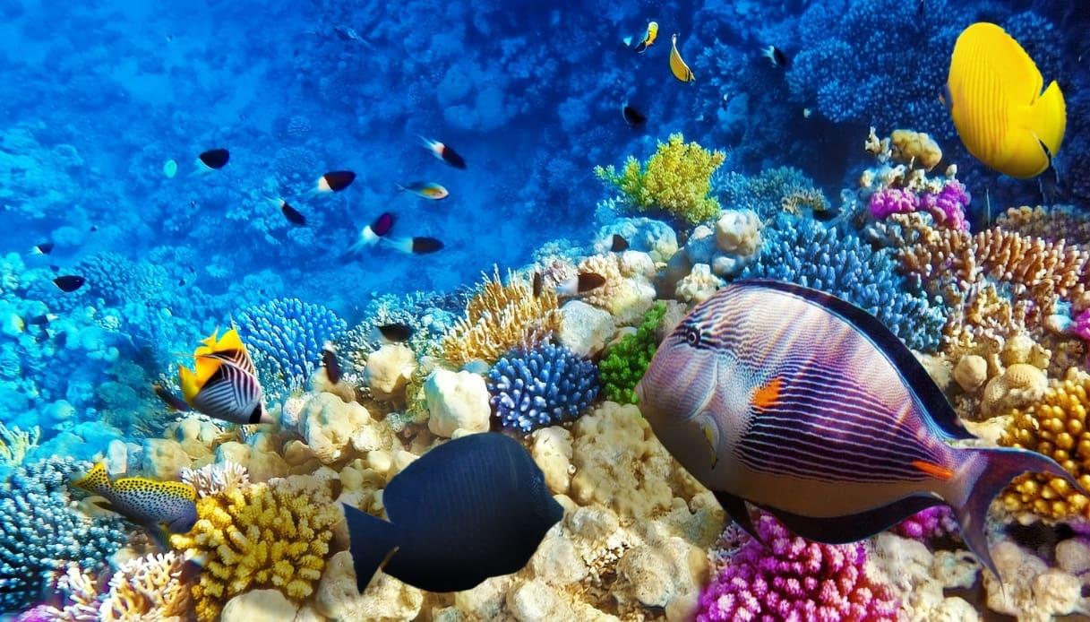Red Sea Cruises